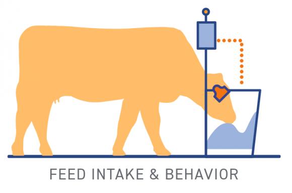 Feed Intake