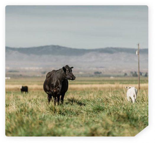 IVF Program 2 - Pasture